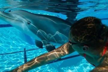 俄媒我国海洋馆要推出海豚仿生机器人保护环境的又一步?