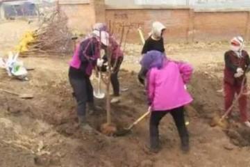 [生态建设]谁家门前谁办理果树收益归自家5万苗木落户德惠布海镇